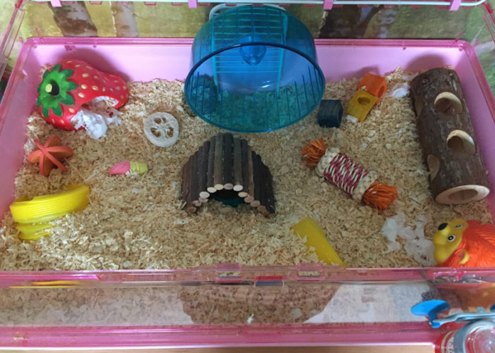 Set Up Hamster New Home