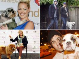 celebrity pets on Instagram