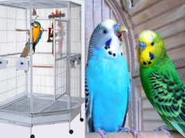 best cages for parakeets