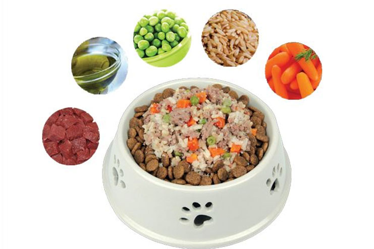 What High Fiber Foods Can I Feed My Dog