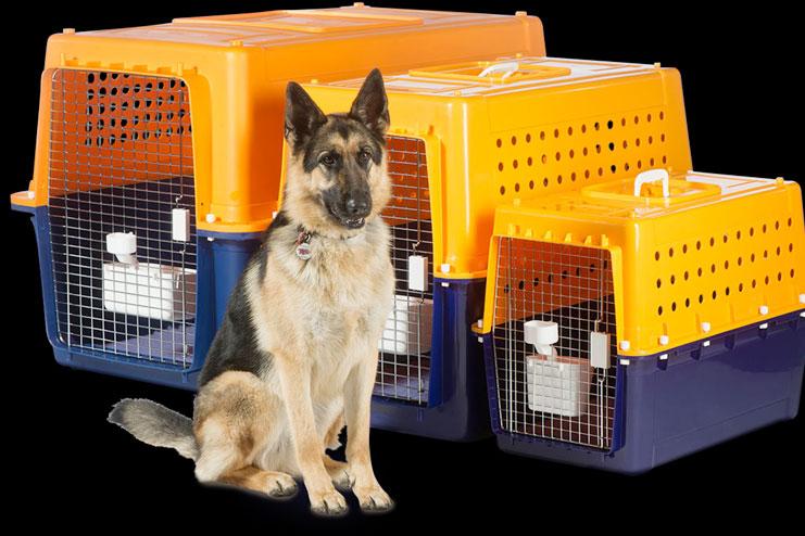 Pick a pet friendly carrier