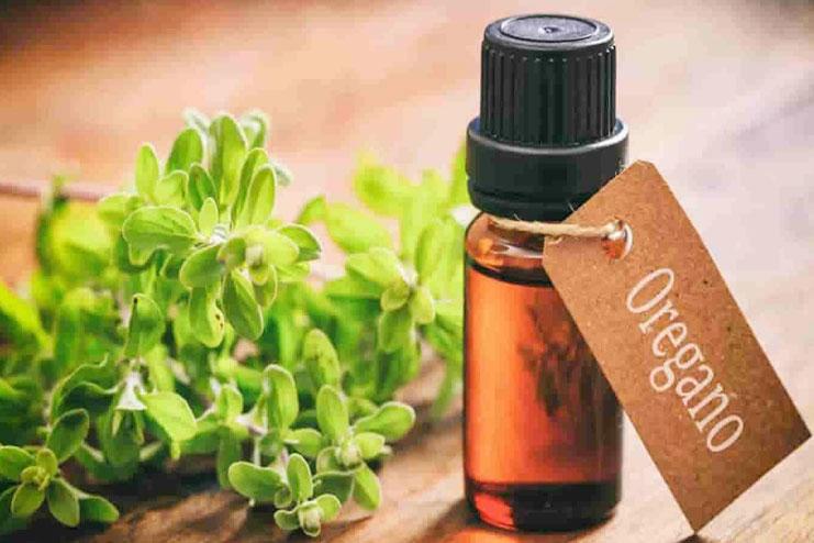 Oregano Oil-strongest natural antibiotics