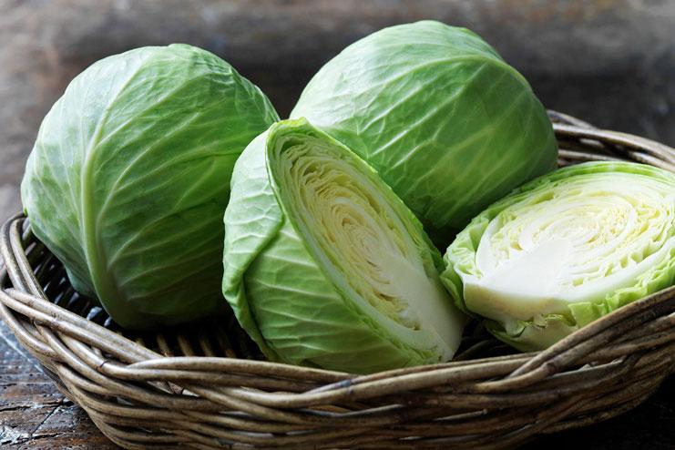 Cabbage-strongest natural antibiotics