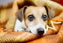 Mistakes that pet owners make