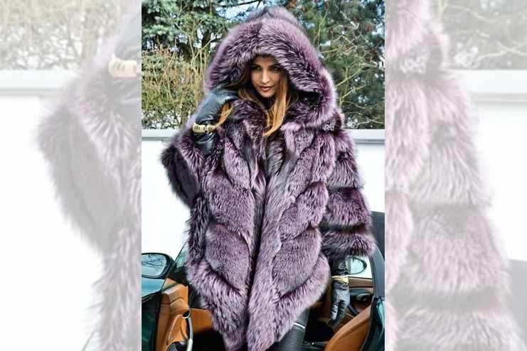 Violet Silver Fox