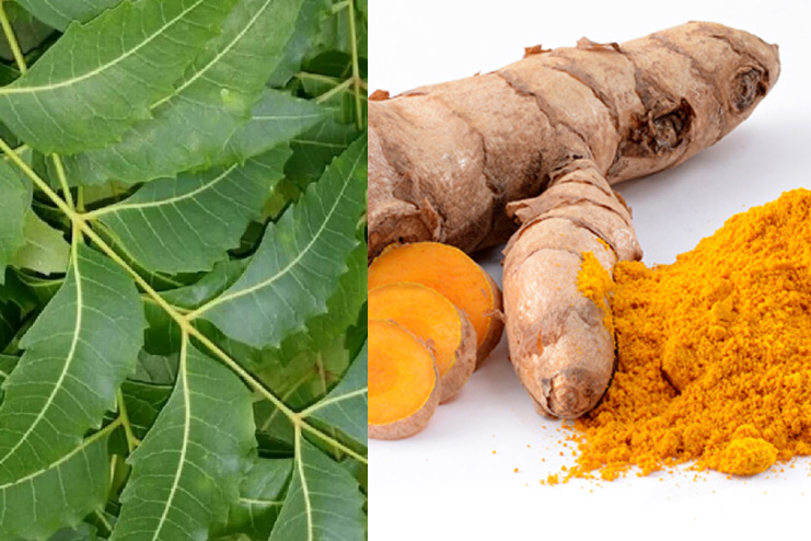 Neem and turmeric homemade toner